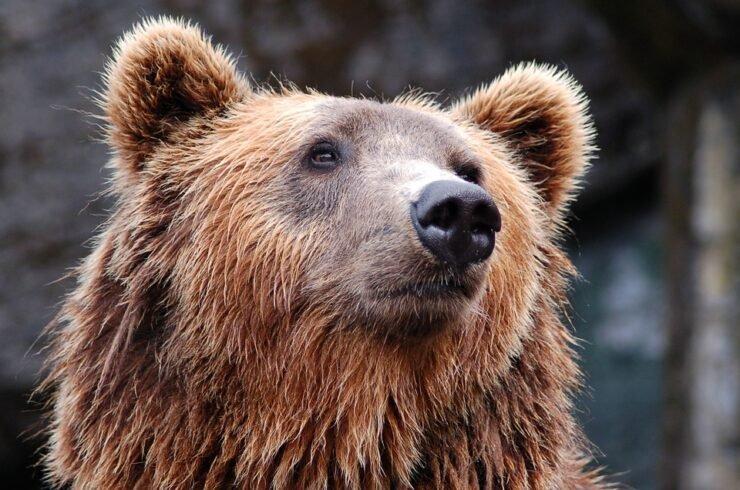 bear-1283347_960_720.jpg