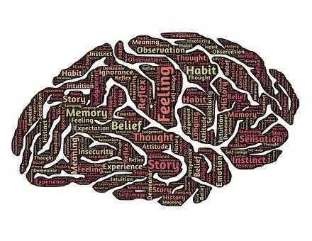 brain-544412__340.jpg