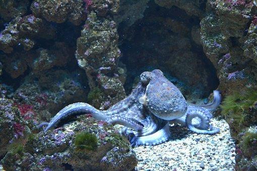fish-1633525__340.jpg